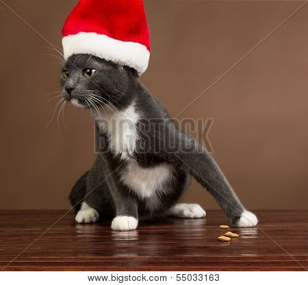 Cat with Santa Claus Hat.