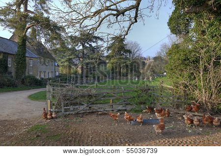 English Village with Farm and Chickens