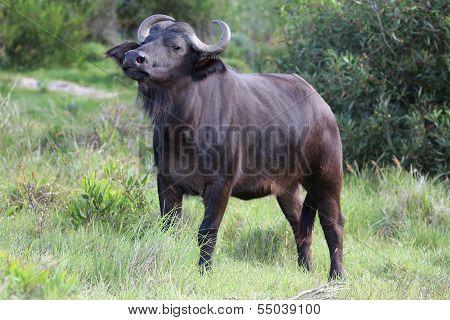 Alert Buffalo