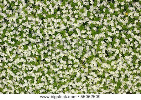 background from small white florets