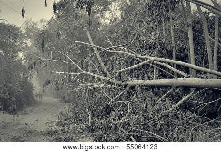Fallen Trees at Devastated Area