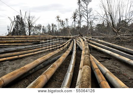 Fallen Bamboo Trees by Pyroclastic