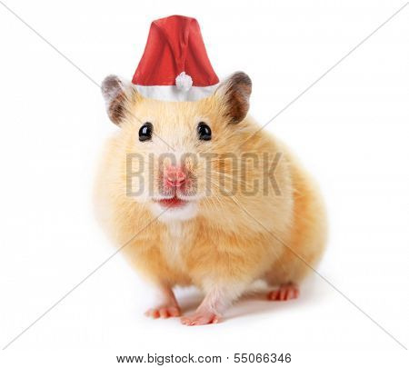Christmas hamster isolated on white