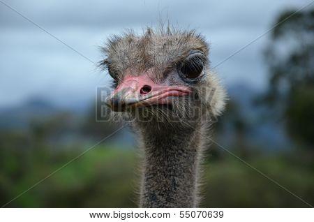 Attentive Ostrich