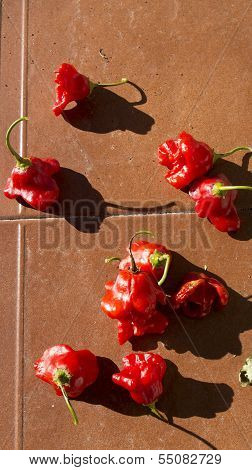 Small red peppers on ceramic tile