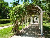 stock photo of pergola  - Pergola in Botanical Garden in Rio de Janeiro - JPG