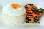 stock photo of gai  - fried basil chicken with fried egg and rice  - JPG