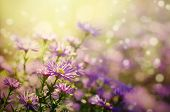 image of violet flower  - Background from tender soft violet blue beautiful flowers - JPG
