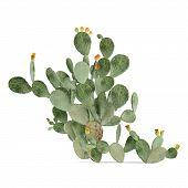 image of peyote  - Plant isolated - JPG