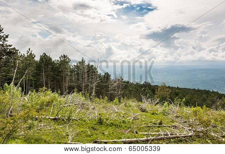 Mountain forest with broken trees