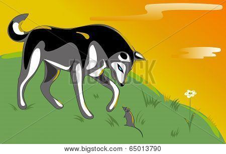 Husky and mouse on the hill