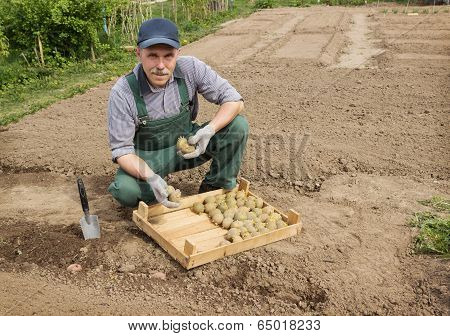 Happy Farmer Is Preparing To Plant Potatoes