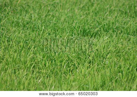 Windy green meadow