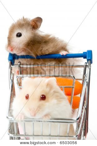 Big Hamster Is Making Shopping With Little Hamster