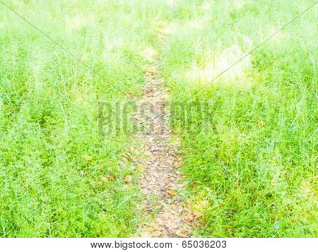 Path In The Grassland