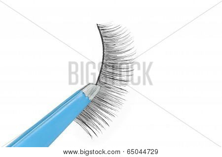 False Lashes And Blue Pincers
