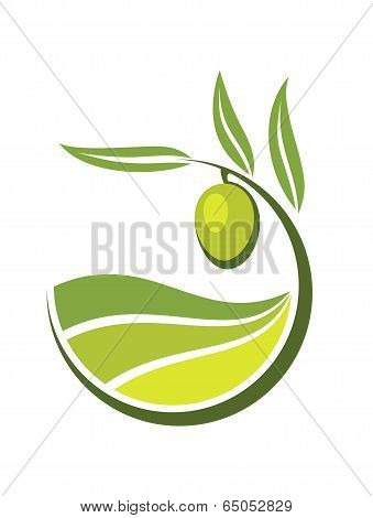 Fresh green olive with grades of olive oil