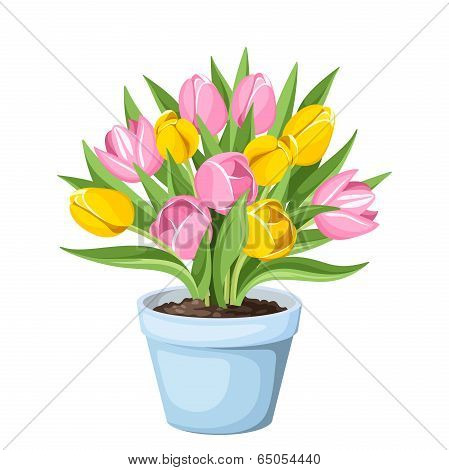 Tulip flowers in a pot. Vector illustration.