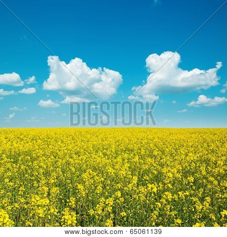yellow field with rape and clouds in blue sky
