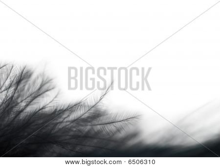 Close-up Photo Of  Black Feather