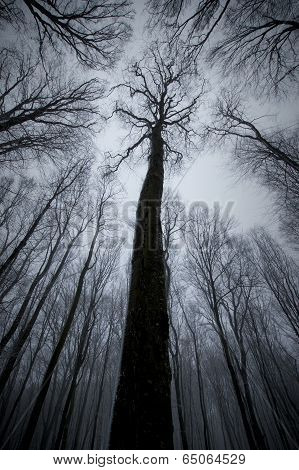 Tree in dark forest on Halloween