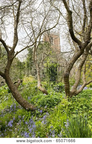 Tree with church