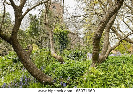 Boughs of a tree