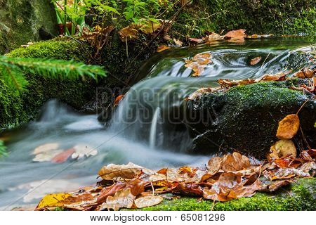 Brook in autumn with fallen leaves  Brook bank overgrown with moss