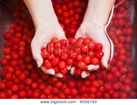 Washing Cherries
