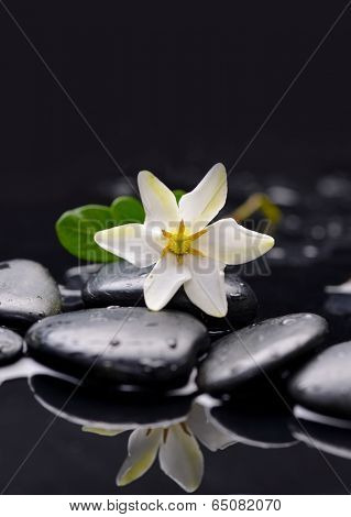 gardenia flower on pebbles �¢�?�?wet background