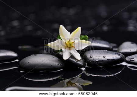 gardenia flower and candle on pebbles wet background