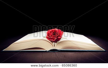 Red Rose On The Open Book With Space For Text