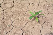 foto of drought  - green plant growing on dried ground drought - JPG