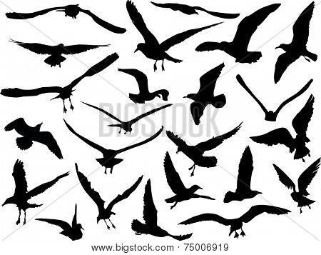 illustration with gulls collection isolated on black background