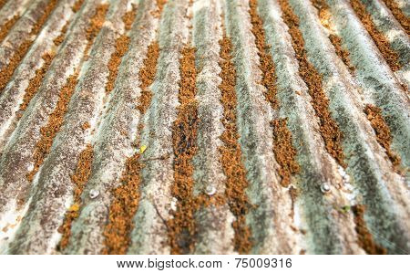 Old Weathered Tin Roof With Tropical Orange Tree Grit In Sydney, Australia