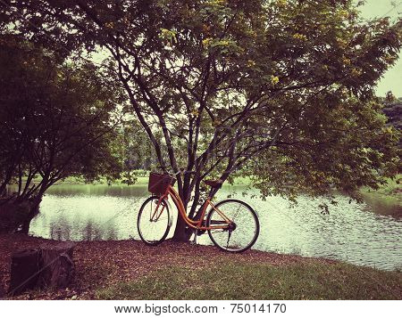 Bicycle in park plus effects