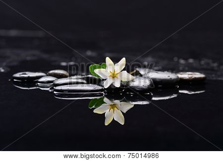 still life with gardenia on black pebbles