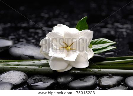 Spa still with gardenia flower with long leaf on pebbles