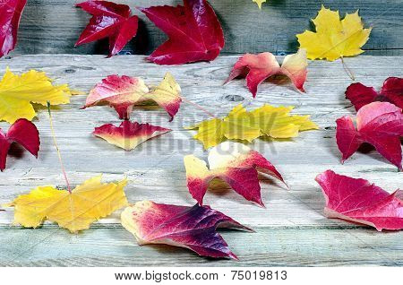 Background From Autumn Leaves