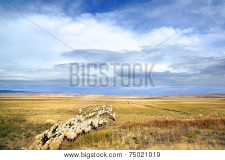 Picturesque autumn rural landscape with field.