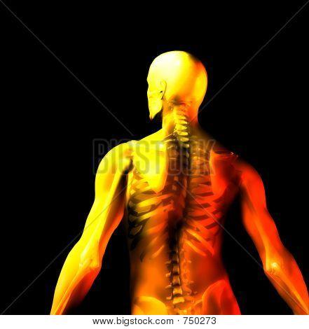 Man Knochen 6