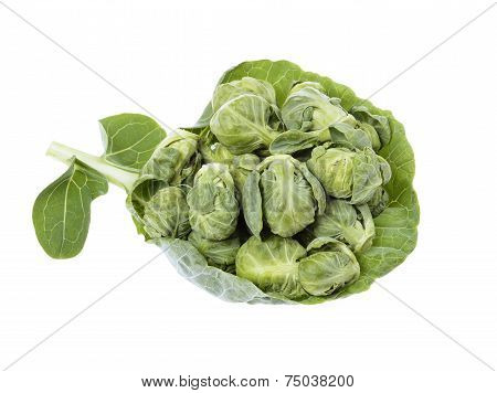 brussels sprouts compromised on green leaf
