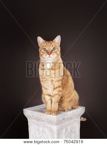 Ginger cat sitting on a column.