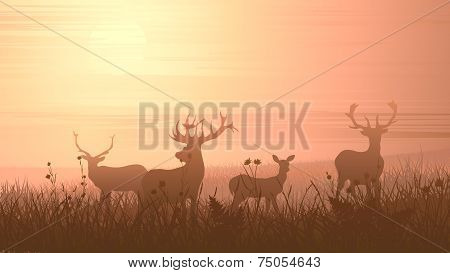 Horizontal Illustration Of Wild Animals On Meadow.