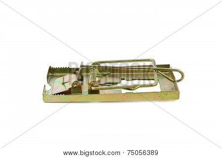 mousetrap, trap