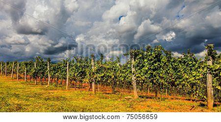Dramatic Tuscan Landscape