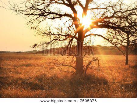 The Tree At Dawn