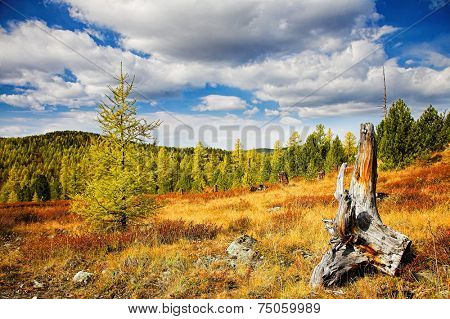 Autumn forest with dead tree on foreground