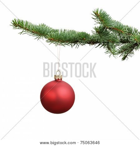 Red Satin Glass Ball Hanging On Christmas Branch