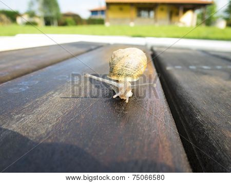 Front Of Snail On Brown Dark Wood Outdoor